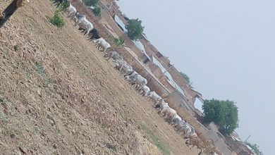 Sell Us Your Farms Or Risk More Attacks - Herders To Farmers In Zamfara