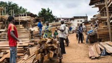 Cameroon and DR Congo Mulls Legalising Artisanal Lumbering To Curb Deforestation