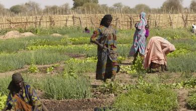 Chad Lifts COVID-19 Restrictions Against Movements Of Farmers