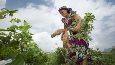 Female Smalholder Farmers at Great Disadvantage In Nigeria - Report