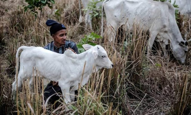 Analysis: Stereotype And Stigma May Drive More Fulani Herders To Crime - Experts