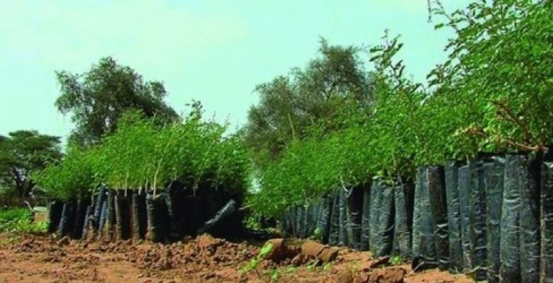 """Cameroon Spends $2 Million Annually On """"Green Sahel"""" Reforestation Project"""