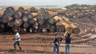 Cameroon To Witness Drop In Tree Cultivation As Timber Export Falls