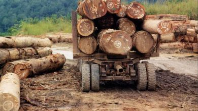 DR Congo Violating Its Own Decision To Suspend Issuance Of Timber Exploitation License