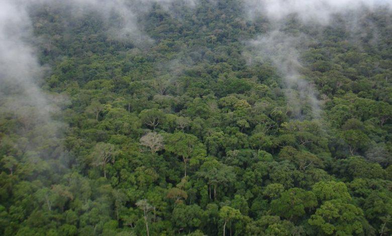 Deforestation, Climate Change Endanger Freetown's Water Supply