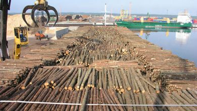 GREENPEACE Calls On Cameroon To Reject Appeal For Tax Reduction By Timber Exploiters