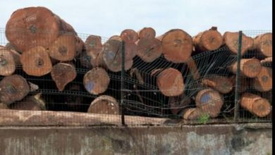Greenpeace Commend Cameroon For Rejecting Tax Reduction For Timber Exploiters