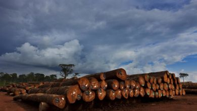 Gabon Forestry Workers President Arrested As Ministry Is Accused Of Corruption