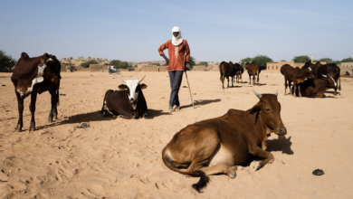ICRC: Triple Emergencies As Lake Chad Herders Battle COVID-19, Violence and Climate Change