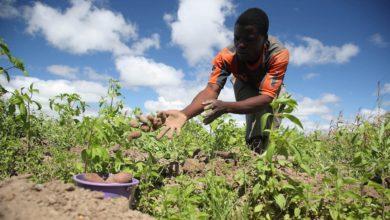 COVID-19 Impacting Negatively On Farming, Farmers Complain