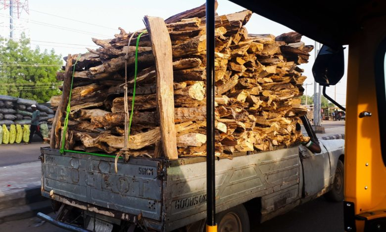 Faced With Insurgency, Firewood Sellers in Borno Opt For New And Green Livelihood