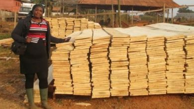 United Nations FAO Boost Cameroon's Small Timber Businesses To Discourage Illegal Trade