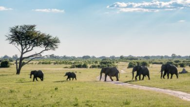 Zimbabwe Bans Mining Activities In National Parks Following Outcry