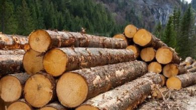 Cameroon To Increase Duty On Timber Products To Discourage Importation