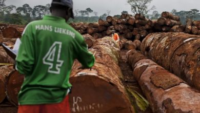 Favouritism A Big Concern As Forestry Companies In Cameroon Apply For New Licences