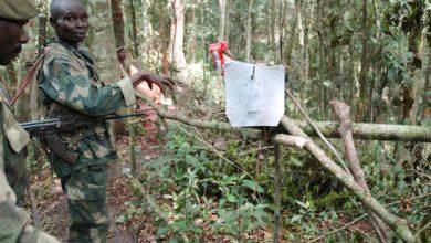ADF Fighters Kill Seven In DR Congo