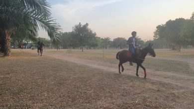 Abuja Park Threatened By Activities Of Horse Riding Youths, Motorists