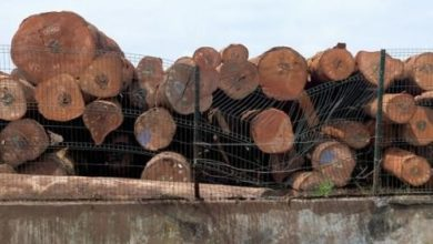 Cameroon's Forestry Felling Tax Drops By $20M IN Two Years