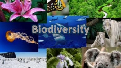 France Gives 10M Euros To Finance Biodiversity Protection In Cameroon