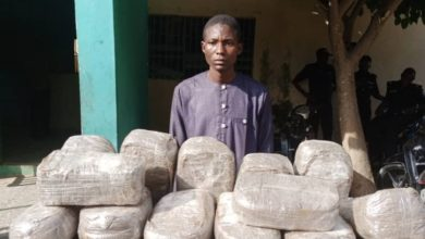 Police Apprehend Man, Mother With 49 Packages Of Indian Hemps In Kano