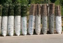 Charcoal Trade Contributing To Forest Depletion In Congo Brazzaville